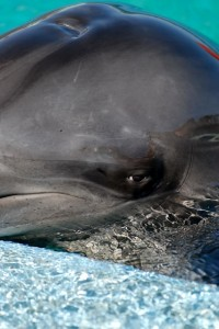 Wildlife Dolphin